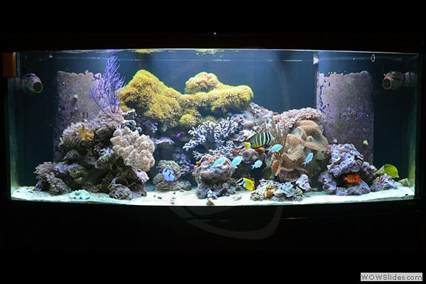 175 Gallon Reef