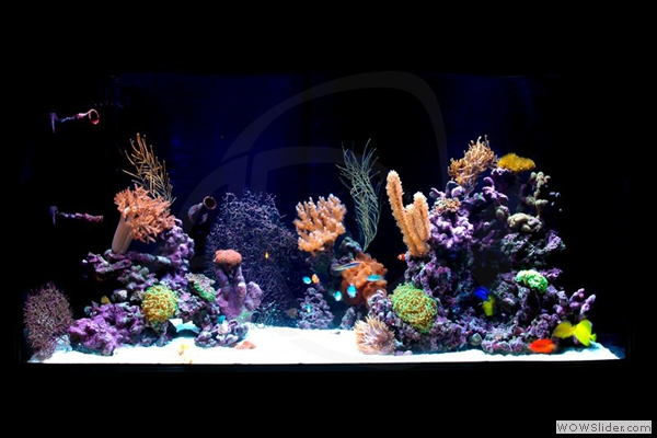 300 Gallon Reef