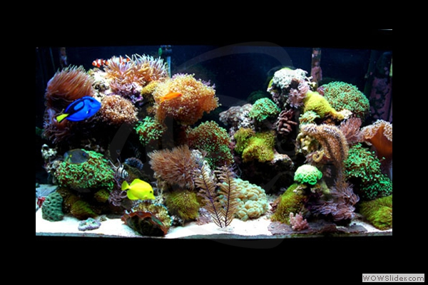 90 Gallon Reef